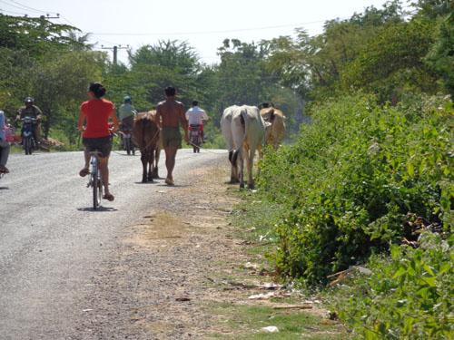 KampotBikeRide