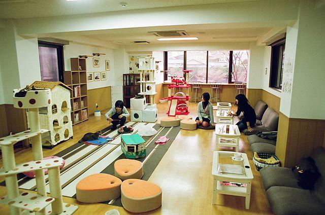 Nekokaigi_Kyoto_WikiCommons