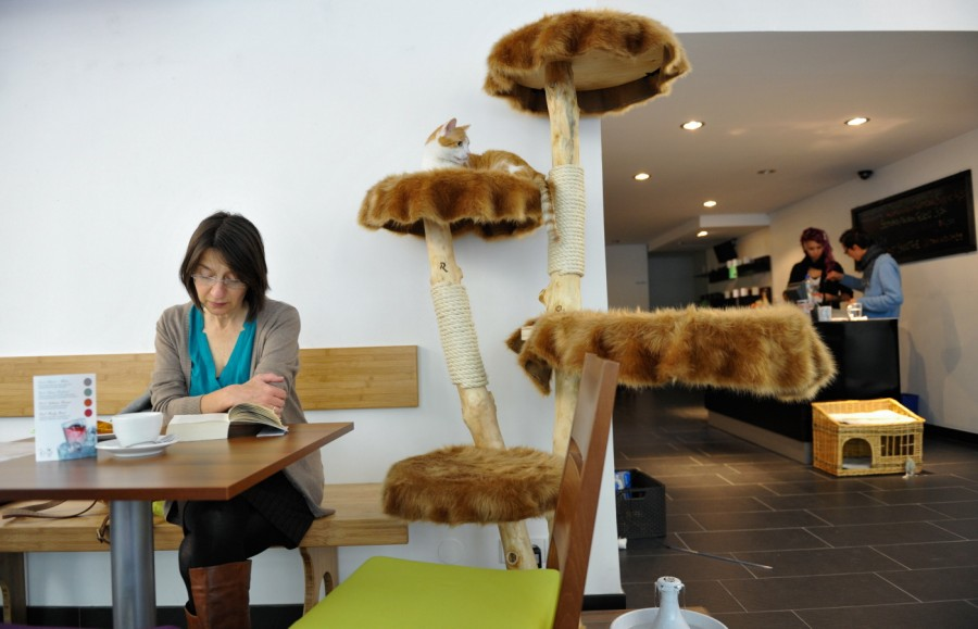 cat-cafe-Germany