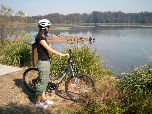 Cycling The Bicentennial Park Wetlands