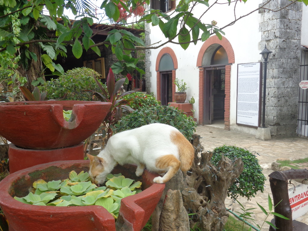 Cat drinking at the Fort in Cebu - Amy McPherson