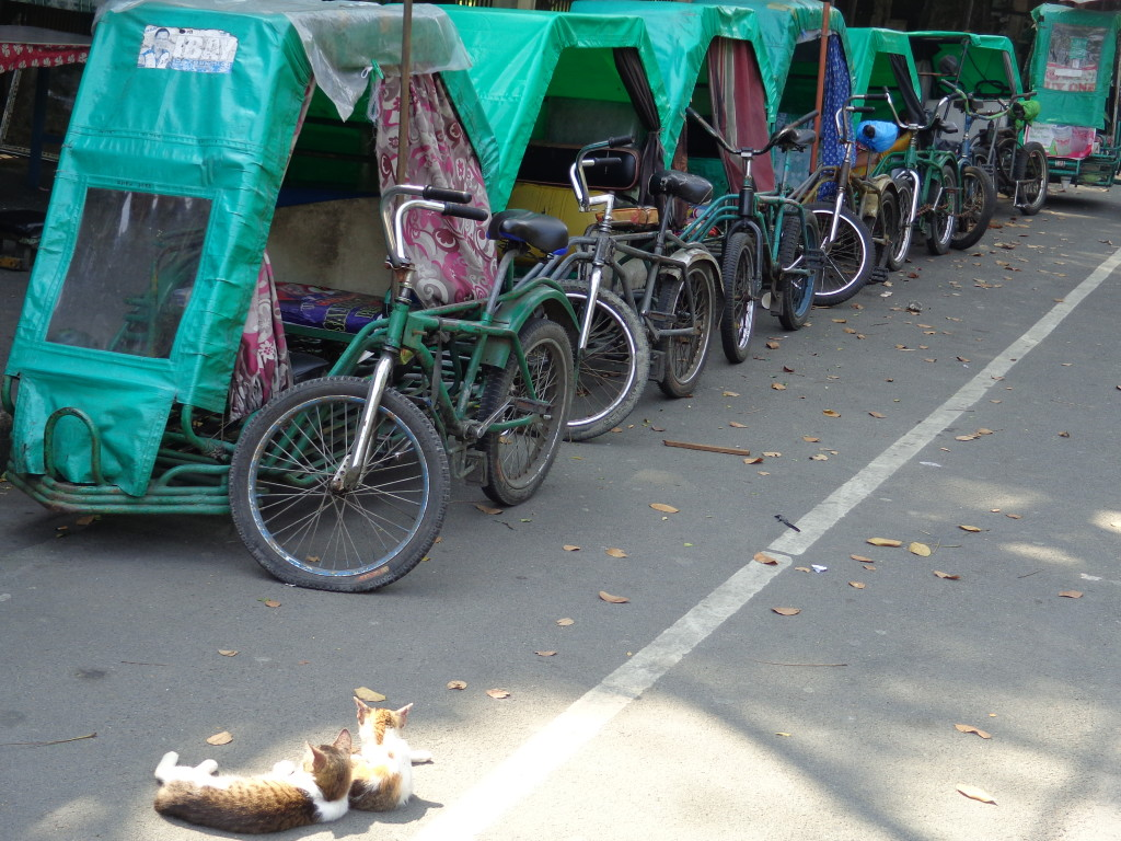 Cats and tricycles of Manila - Amy McPherson