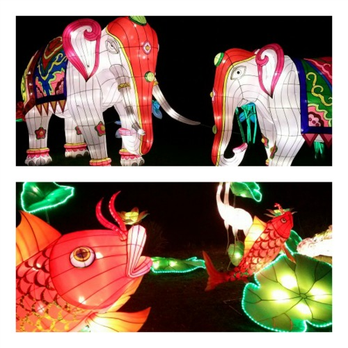 How great are these lanterns! (Images: William McPherson)